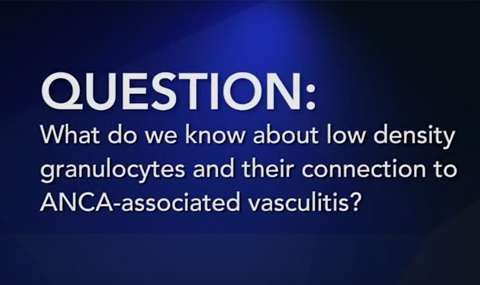 Question: What do we know about low-density granulocytes and their connection to ANCA-associated vasculitis?