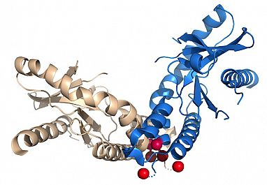 Illustration showing protein with SAVI mutations
