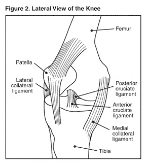 Lateral View of the Knee
