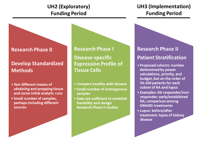 Image depicting the AMP RA/SLE Program Research Phases