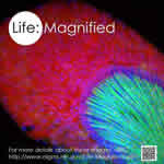 Life: Magnified cover