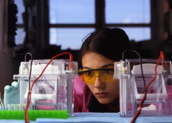 This photograph shows Anastassia Tikhonova B.S. using electropheresis apparatus to separate proteins by molecular weight.
